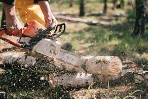 Stihl Motorsägen Empfehlung von Holzarbeiter.com
