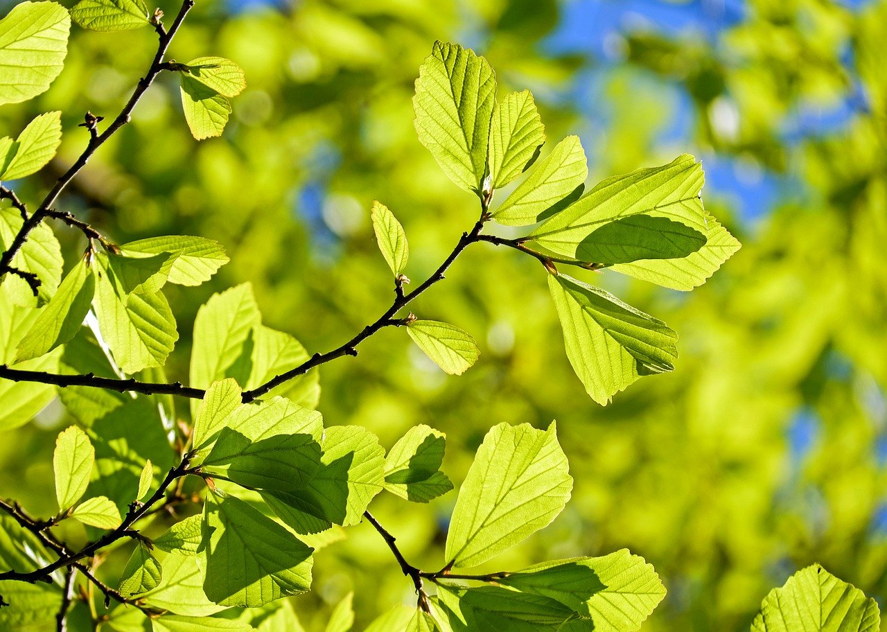 Gartenhäcksler Vergleich und Gartenhäcksler Ratgeber